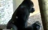 maymun sitili seks