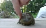 Sevilmekten Hoşlanan Kurbağa