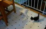 oynamaya çalışan kedi