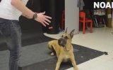 Köpeklerin Sihir Gösterisine Verdiği Tepki