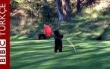 Günün En Güzel Videosu Yavru Ayının Oyun Keyfi