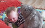 Cute Cat And Baby Videos Compilation 2015