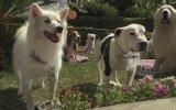 Beverly Hills Chihuahua 3: Viva La Fiesta! (2012) Fragman